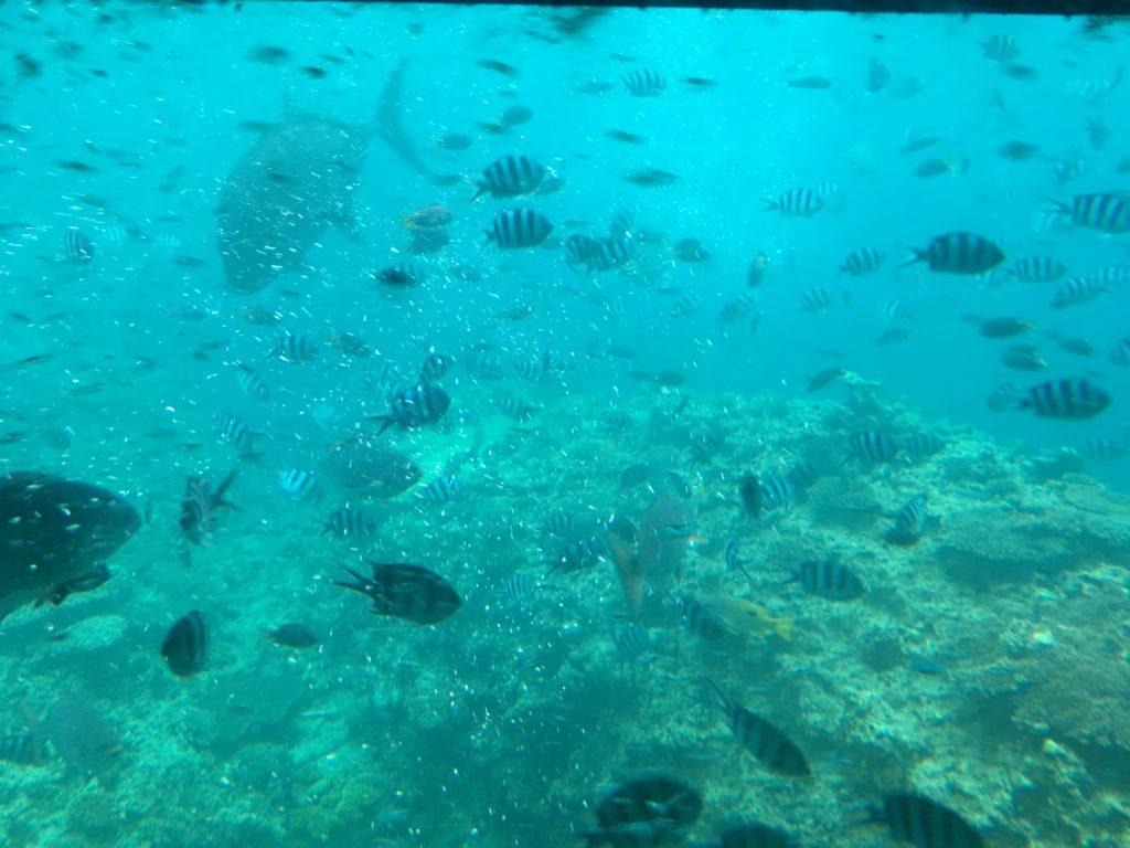 ルネッサンスリゾートオキナワ・クマノミ号の水中の魚