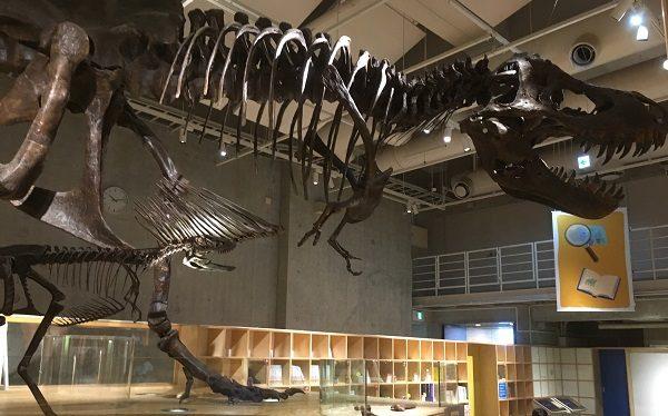 コンパス恐竜