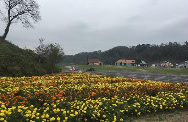東京ドイツ村花