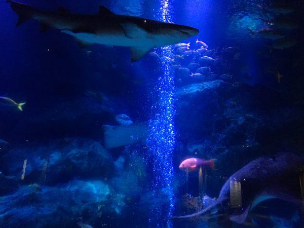 すみだ水族館・サメ