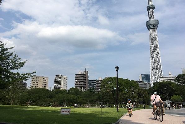 墨田区隅田公園・芝生